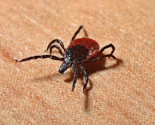 Find a tick? Get ticked off!
